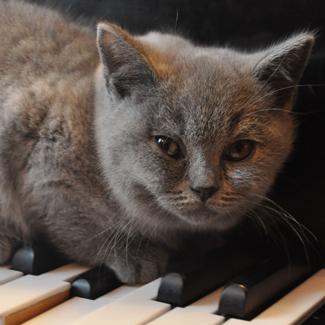 Ash: Male Grey Cat