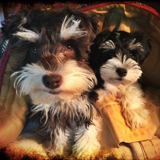 Stella & Flo: Bonded Sister Pups