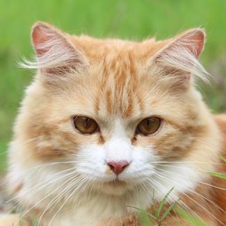 Belle: Female Senior Cat