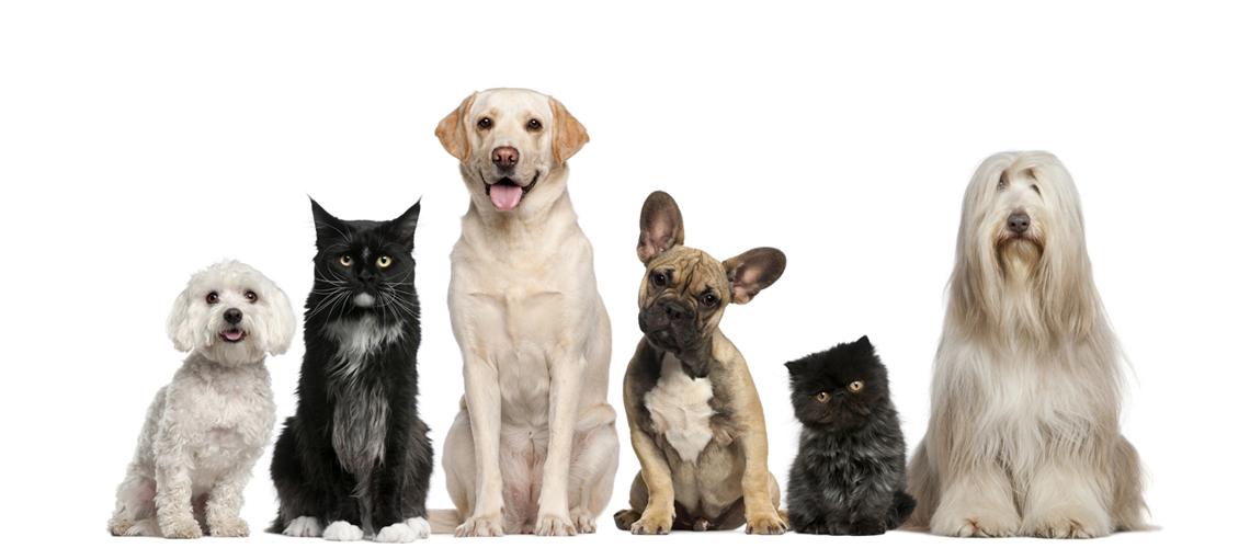Pet Adoptions On Premises