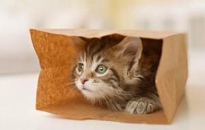 Paper Bag Hide & Seek